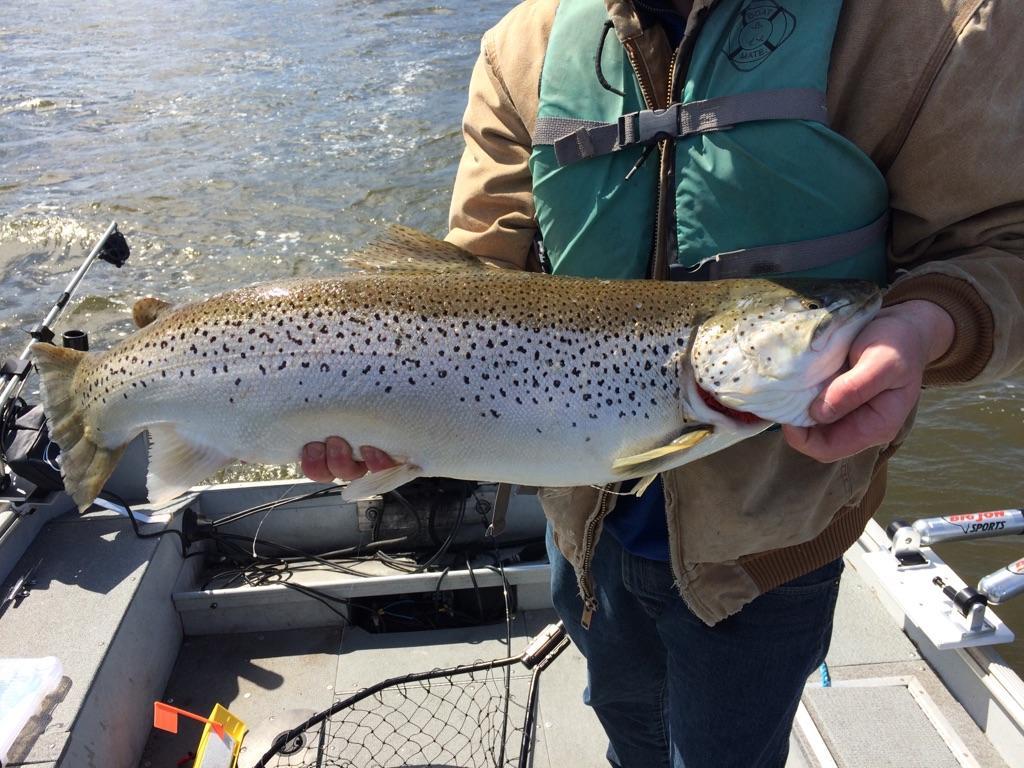 Shawn393 lake erie united walleye bass perch fishing for Lake erie fishing report 2017